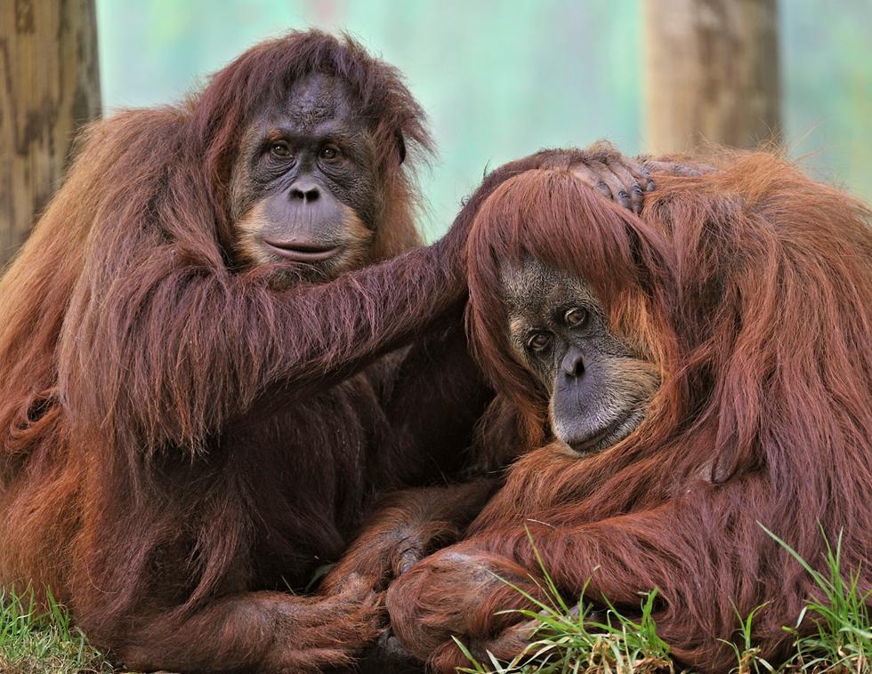 """רוחל'ה (ימין) עם בתה רוויטל שעברה לגן חיות בצרפת ב-2009 (צילום: טיבור יגר, ספארי ר""""ג)"""