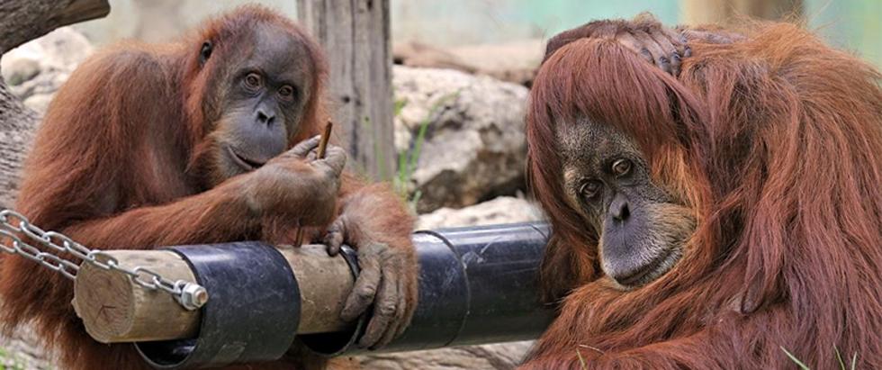 """רוחל'ה, בת 48 (ימין) וטוסי בת 31, בספארי ברמת גן (צילום: טיבור יגר, ספארי ר""""ג)"""