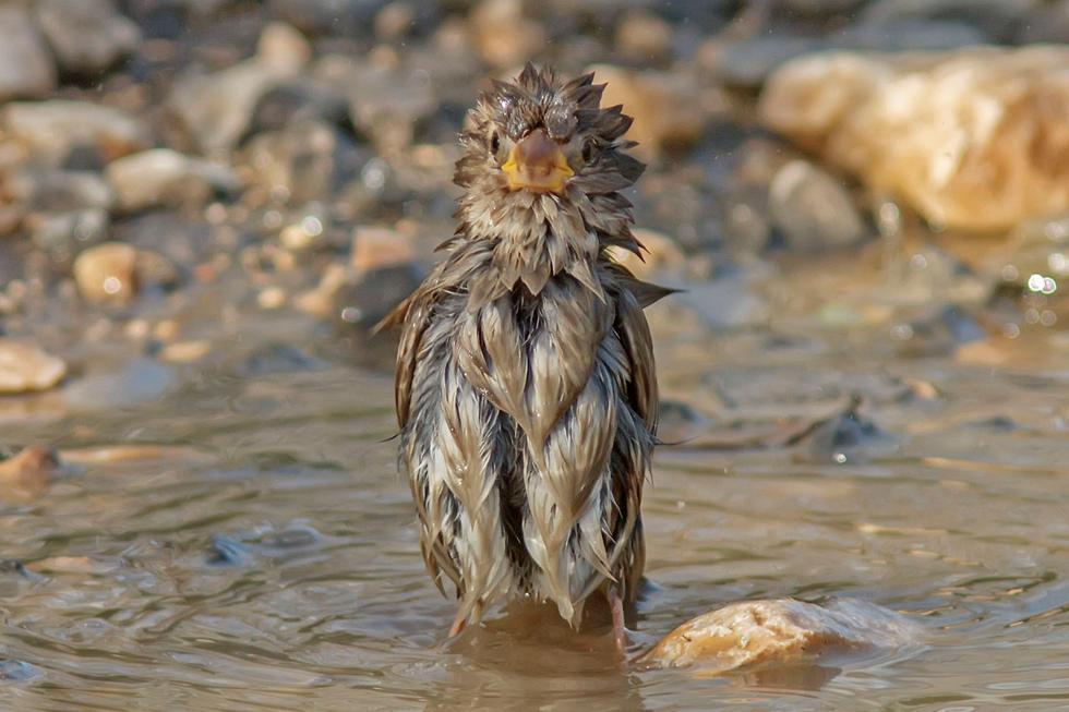 דרור באמבטיה (צילום: אהרון שמשון)