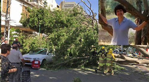 Нина Бродcкая и упавшее дерево