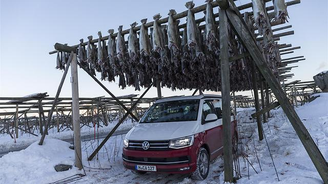 ייבוש דגי בקלה בשיטה הויקינגית. החניה - מודרנית (Achim Hartmann)