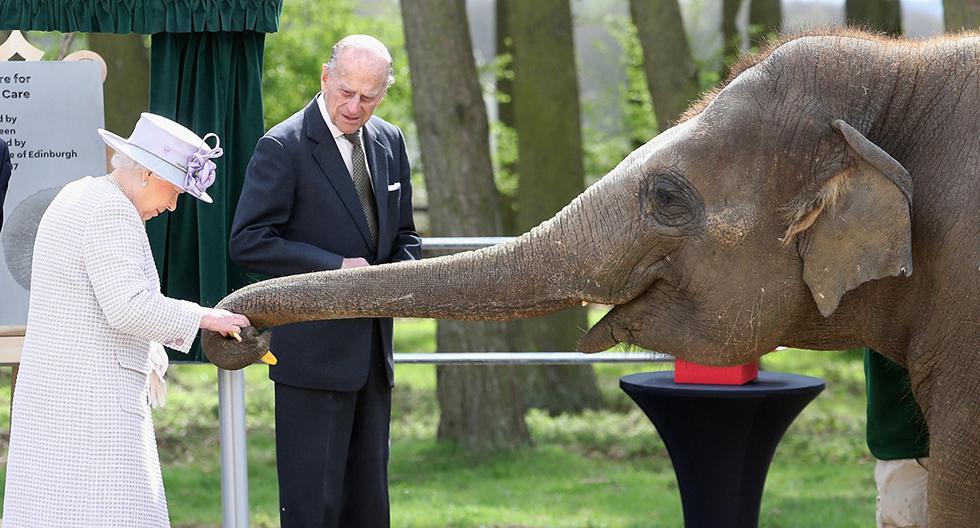 מלכת בריטניה אליזבת השנייה מאכילה את הפילה דונה בגן חיות בעיר דאנסטייבל שבאנגליה. משקיף מהצד: בעלה של המלכה, הנסיך פיליפ (צילום: gettyimages)