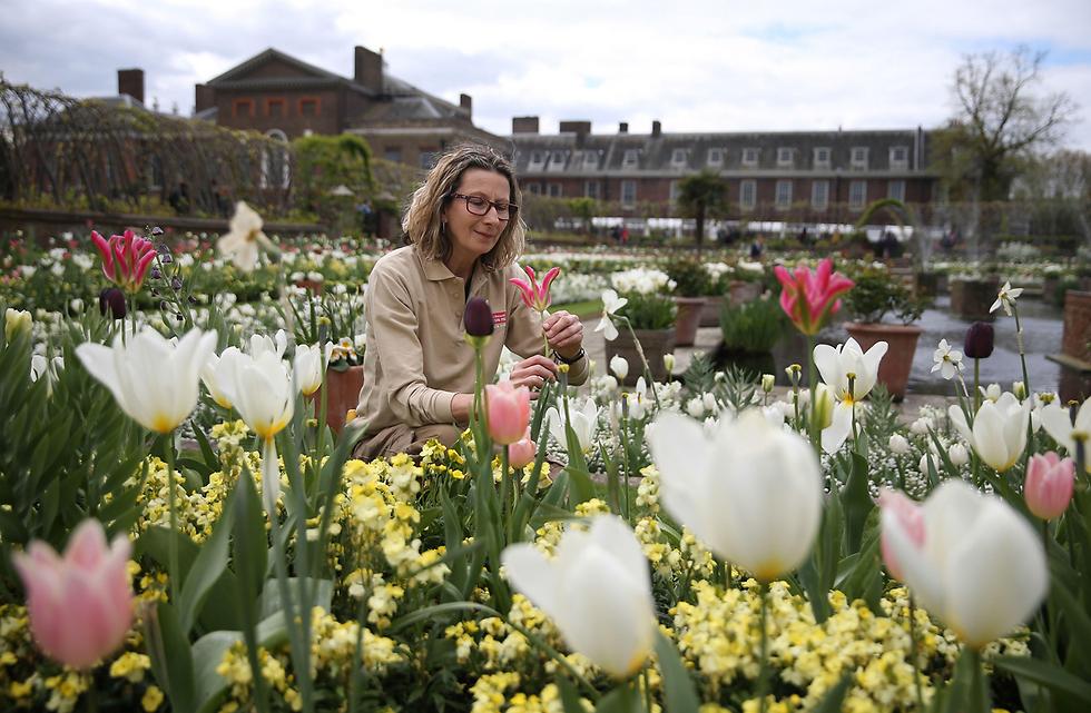 הגינה הלבנה שהוקמה בארמון קנזינגטון בלונדון לזכרה של הנסיכה דיאנה, שנהרגה לפני 20 שנה בתאונת דרכים בפריז (צילום: AFP)