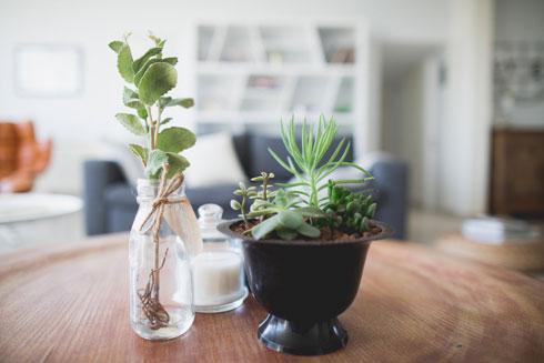שימוש בצמחיה הוא פתרון זול ונגיש (צילום: דנה סטמפלר עשהאל)