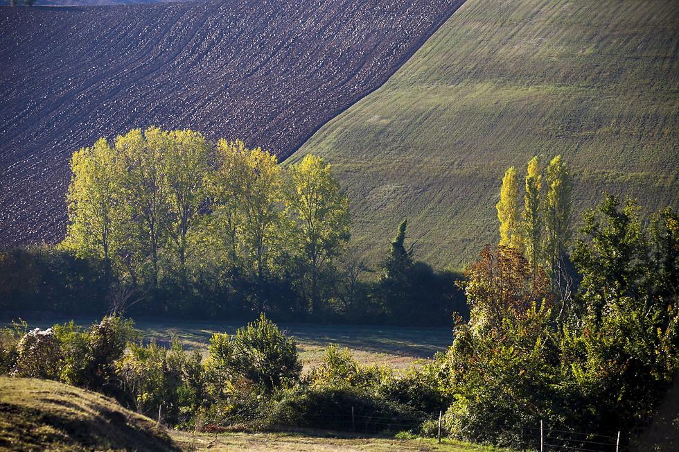 אזור גסקוני (צילום: shutterstock) (צילום: shutterstock)