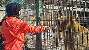 В палестинском зоопарке медведь откусил руку 9-летнему мальчику