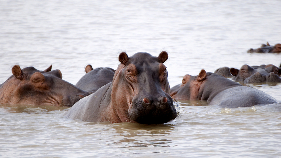 שמורת סאלו בטנזניה - שמורת חמשת האגמים  (צילום: shutterstock)