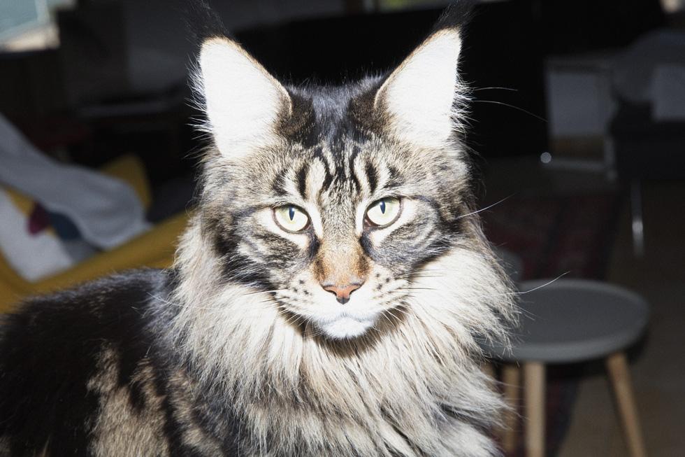 ביתה של רייך ביפו, בו היא מתגוררת עם בן זוגה, יניב (קטי) מאירי, הילדים אמיל, 10 ואדם, 7, וכנופייה של חתולים (צילום: יניב אדרי)