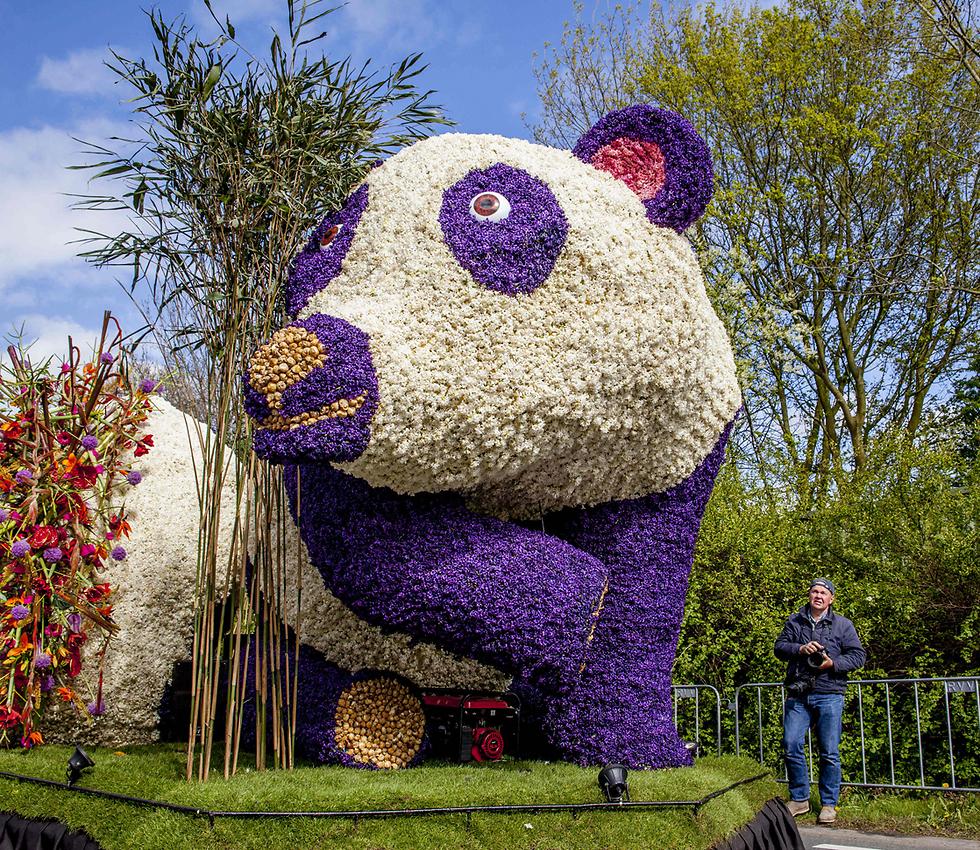 בעיר ליסה שבהולנד ערכו את צעדת הפרחים השנתית (צילום: MCT)