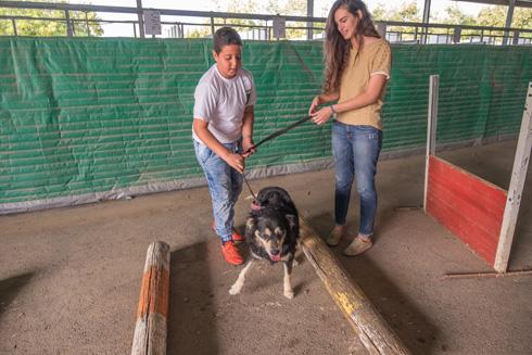 """""""דרך הכלב"""" - מרכז הכלבים של העמותה. המועמדת אדר גנדלסמן (צילום: רויטל אילוז)"""