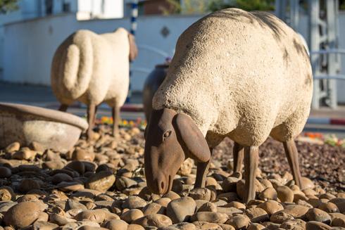 ושוב רחוב הגליל בגני תקווה, והפעם מעגל התנועה עם הכבשים (צילום: דור נבו)