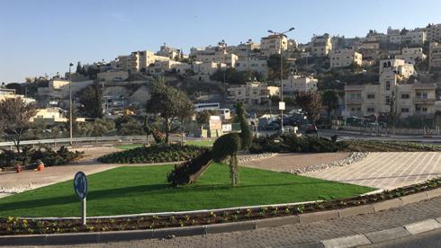 עצים גזומים היטב במעגל תנועה בירושלים. בניגוד לכיכר אמיתית, אל מעגל התנועה אין גישה (צילום: באדיבות עיריית ירושלים)