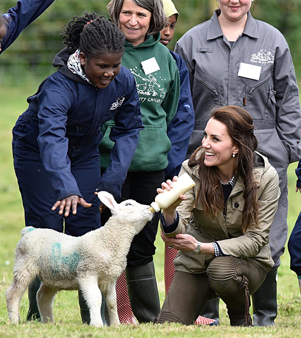הדוכסית מקיימברידג' קייט מידלטון מאכילה טלה בחווה בכפר ארלינגהאם שבאנגליה (צילום: EPA)