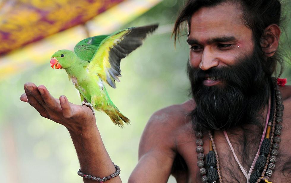 מאמין הינדי משחק עם תוכי בעיר אללהאבאד, הודו (צילום: AFP)