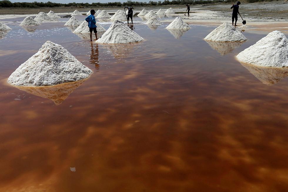עיראקים אוספים מלח למכירה בשווקים בבריכת מלח בדיוונייה (צילום: רויטרס)