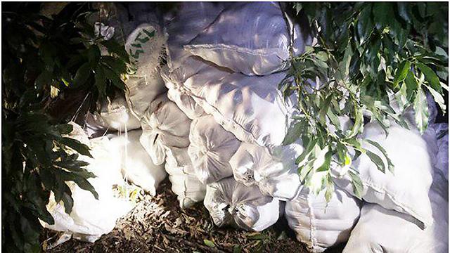 """שקי אבוקדו שנקטפו על ידי גנבים ונתפסו מוכנים להובלה (צילום: מועצת מנשה) (מתוך דו""""ח מבקר המדינה)"""