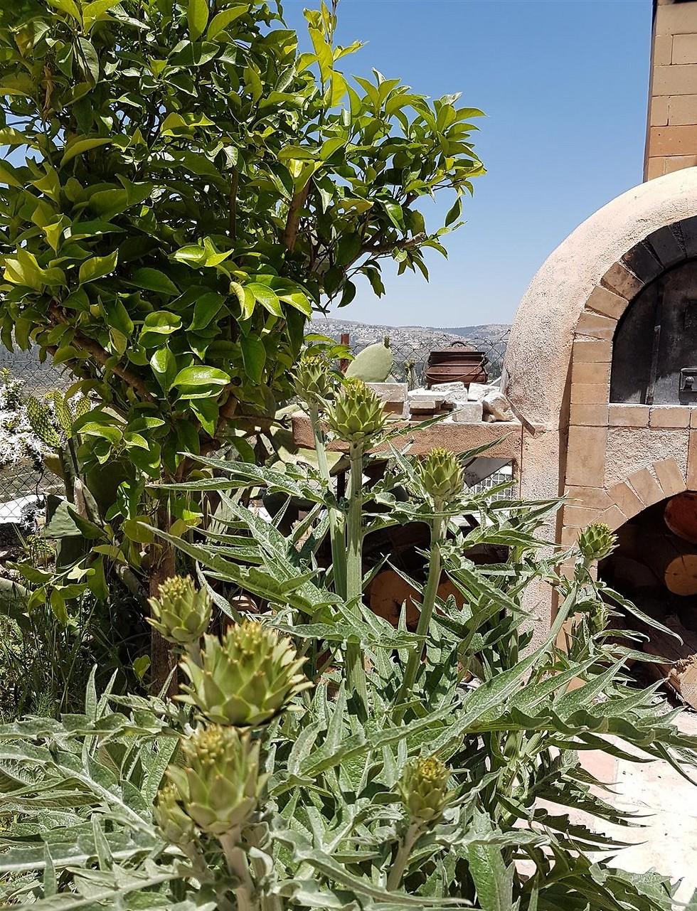 הבוסתן של עזרא קדם בהרי ירושלים: חלום רטוב של כל שף (צילום: יהודה נהר)