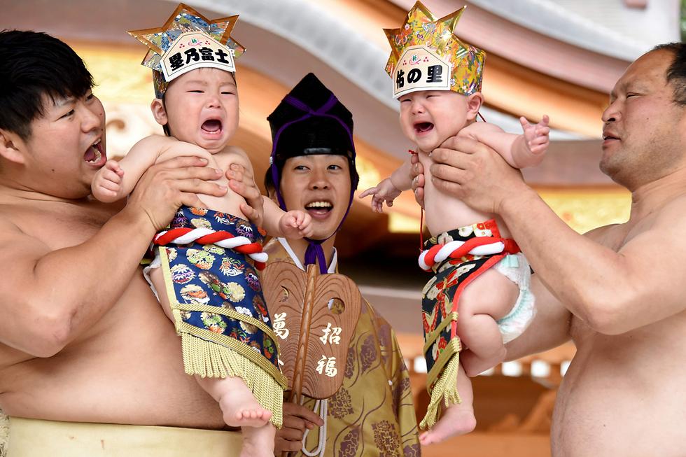 מתאבקי סומו מחזיקים תינוקות בוכים בתחרות הבכי השנתית בסגמיהרה, יפן. יפנים מאמינים שבכיים הטהור של התינוקות מגרש רוחות רעות ושומר עליהם מכל רע (צילום: AFP)