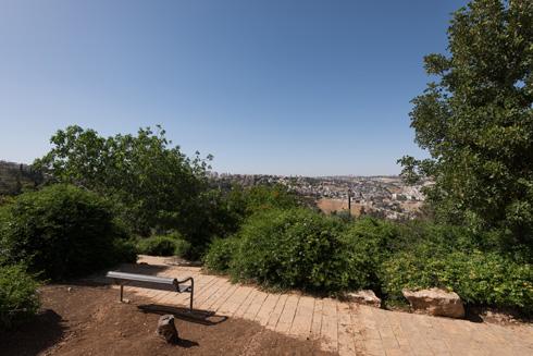 נוף ארץ-ישראלי מלאכותי, שתוכנן וניטע בהצלחה. טיילת ארמון הנציב (צילום: ליאור גרונדמן)