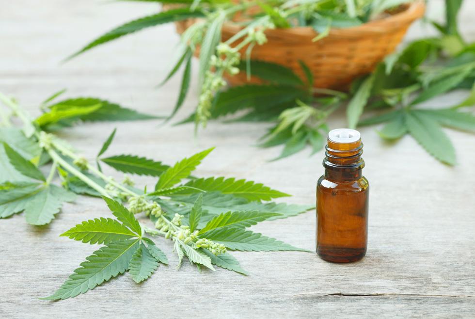"""""""ה-CBD הוא חומר אנטי דלקתי, אנטי בקטריאלי ונוגד חמצון. בניגוד לעישון או אכילה, מוצרי טיפוח המבוססים על הקנבינואיד CBD אינם בעלי השפעה פסיכואקטיבית"""", אומר שי אברהם, מגדל קנאביס רפואי, חוות שיח (צילום: Shutterstock)"""