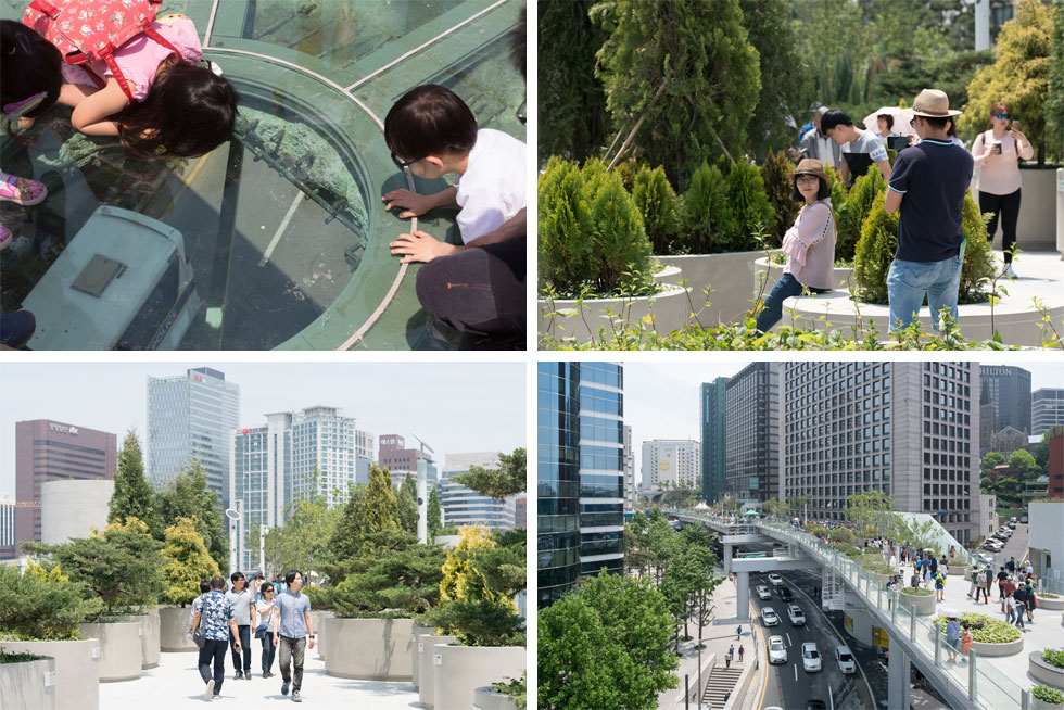 לאורך כקילומטר צועדים התיירים בתוך המגוון הירוק של דרום קוריאה: 24 אלף עצים וצמחים מ-228 זנים ותתי-זנים (צילום: ©Ossip van Duivenbode, MVRDV)