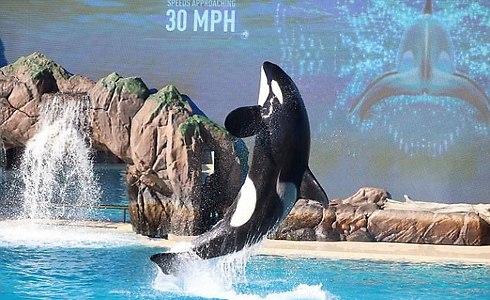 הלוויתן המאכזב של עולם המים