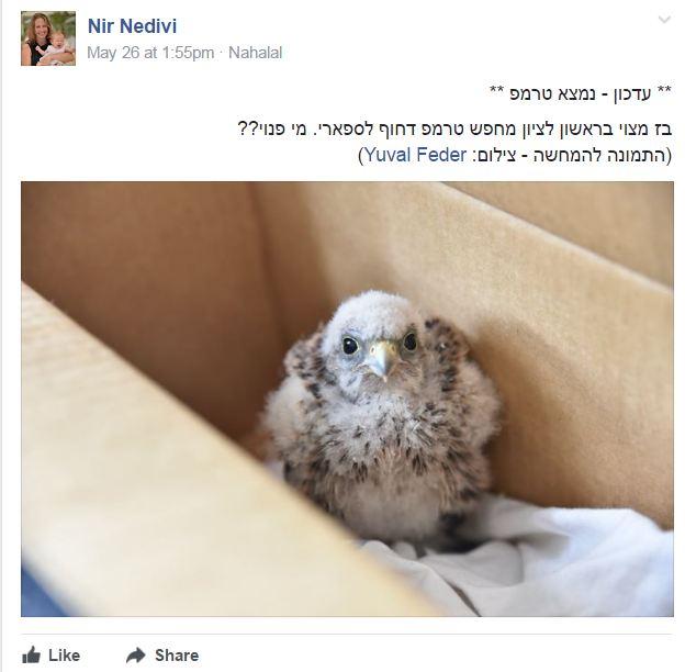 """(צילום: מתוך קבוצת הפייסבוק """"העברה מהירה של חיות בר פצועות לביה""""ח לחיות בר בספארי"""")"""
