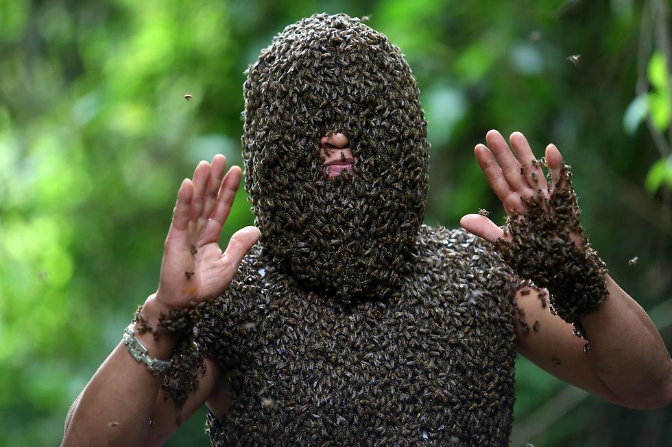אלפי דבורים על גופו של בווי דוי נאט, כוורן וייטנאמי (צילום: EPA)