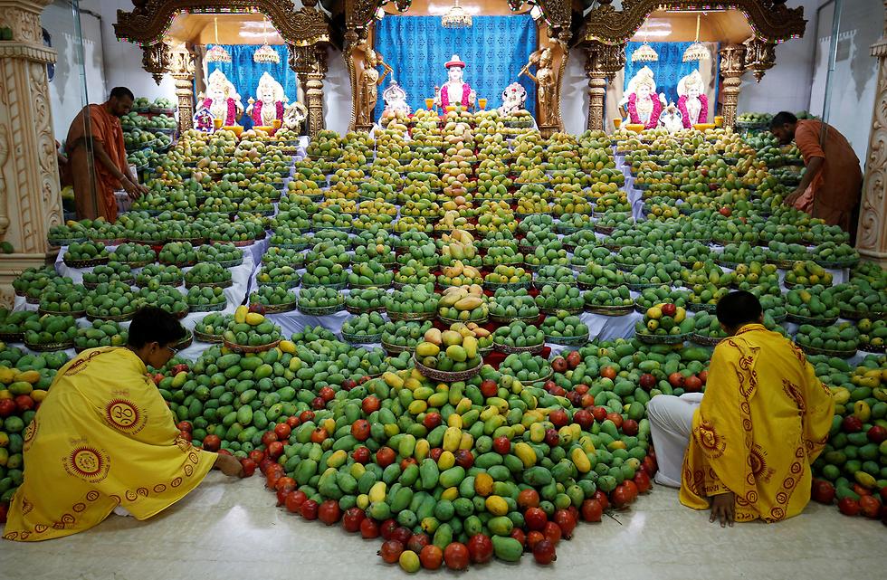 מאמינים הביאו לאל ההינדי סוואמינראיין מנגואים במהלך חגיגות פסטיבל המנגו באחמדאבאד, הודו  (צילום: רויטרס)