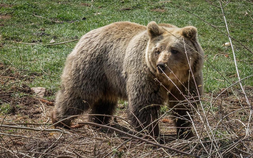 מקום מיוחד לביקור: בית היתומים לדובים (צילום: איתמר קוטלר)