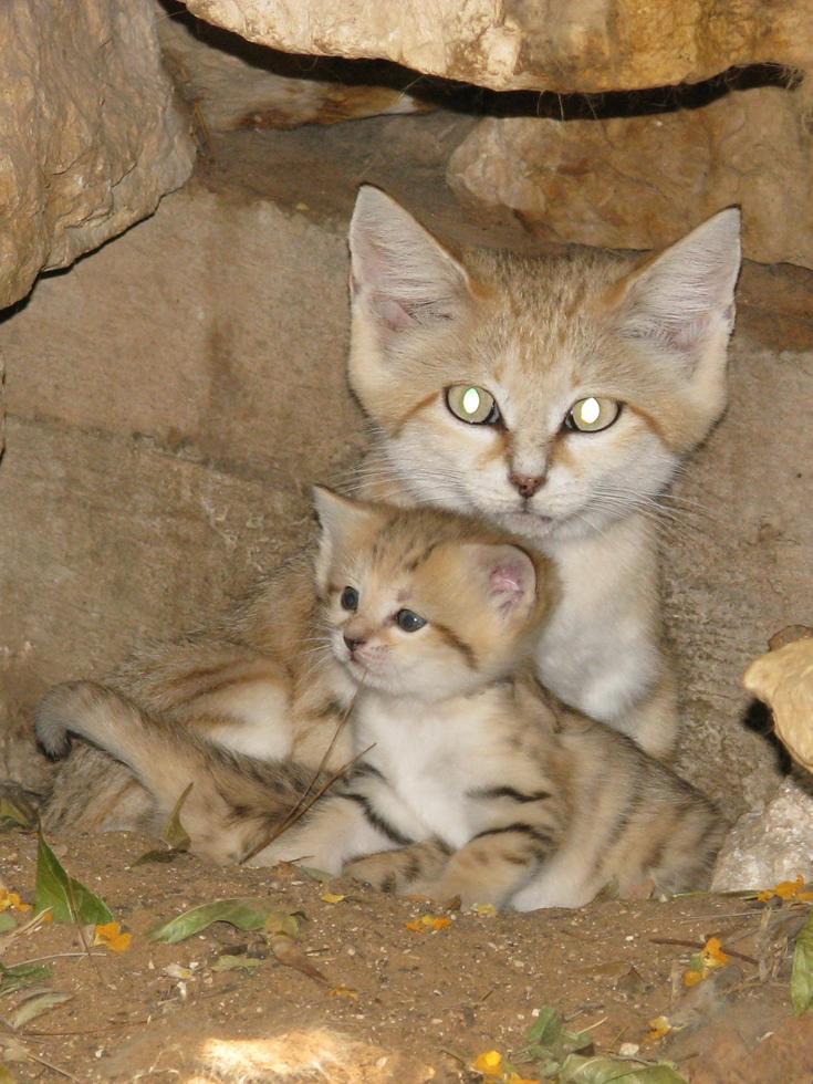 עם אמא רותם כשהיתה גורה (צילום: נועה טולדנו, ספארי ר''ג)