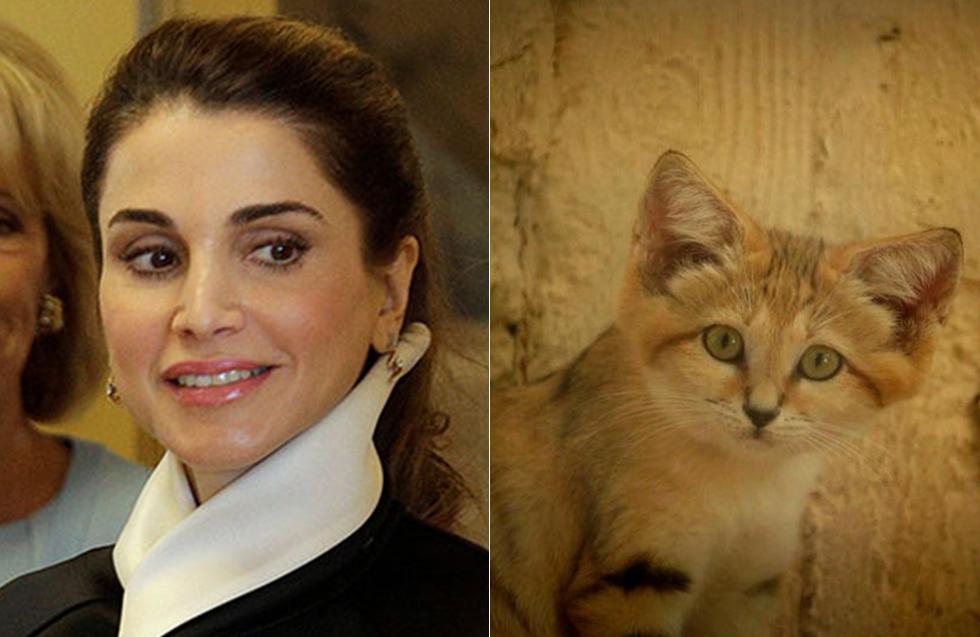 ראניה חתולת החולות וראניה, מלכת ירדן (צילום: רויטרס, ארז ארליכמן)