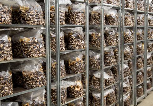 בית גידול לפטריות, חומר הגלם לתרכובות שיכולות להחליף את התרכובות הסינתטיות, שמקורן בנפט (צילום: courtesy of ©Officina Corpuscoli   Maurizio Montalti)