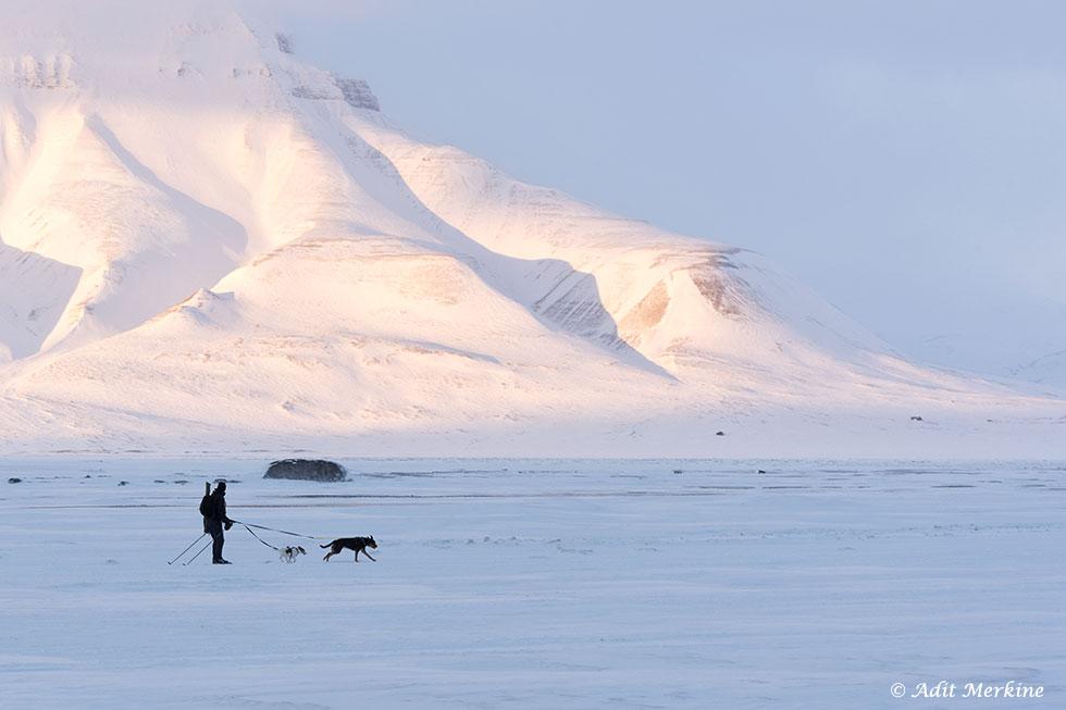 גבר נושא רובה גולש בעמק עם שני כלבים (Adventdalen, קרוב ל Longyearbyen). (צילום: עדית מרקין ©)