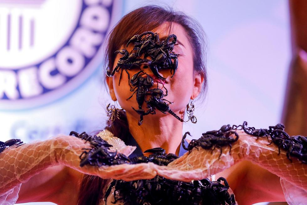 """""""מלכת העקרבים"""" של תאילנד. עשרות עקרבים מטיילים על פניה וגופה של קנצ'אנה קטקאו במוזיאון """"ריפליס תאמינו או לא"""" בעיר פטאיה. קטקאו מחזיקה בשני שיאי גינס שקשורים, איך לא, לעקרבים (צילום: EPA)"""