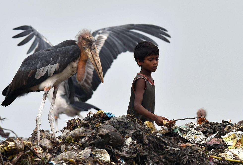 ילד מחטט באשפה ולצדו חסידה במדינת אסאם, הודו (צילום: AFP)