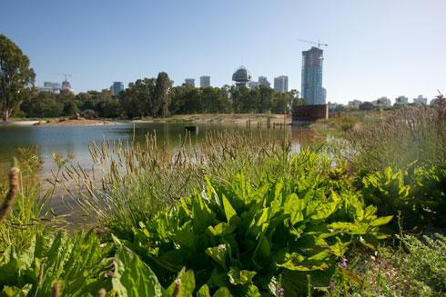 """צמחייה ממינים שונים כבר ממלאת את אחת מגדות האגם. """"האתגר"""", מסביר האדריכל, """"יהיה לא לתת לצמחייה הפולשת, זו שלא נשתלה במקום, להתפתח"""" (צילום: דור נבו)"""
