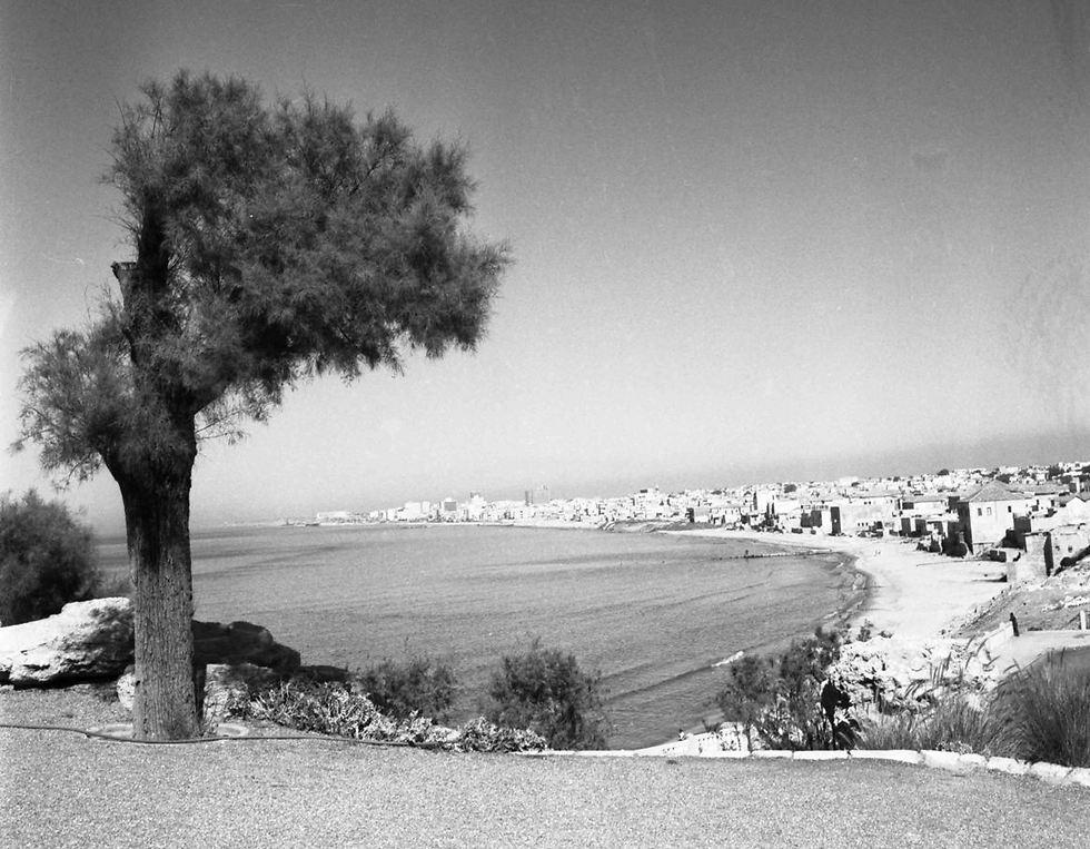 מבט מהגבעה ביפו אל תל אביב, 1960 (צילום: וילי פולנדר)