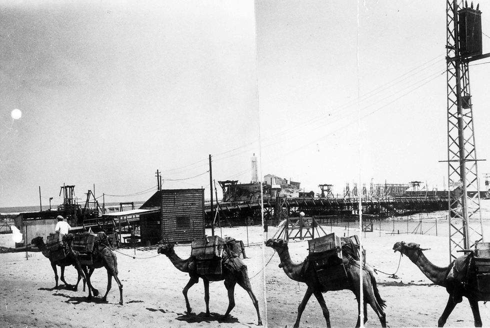 אורחת גמלים בתל אביב, לפני קום המדינה (צילום: ארכיון חברת החשמל)