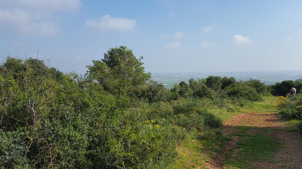 בין הצפון למרכז: רמת הנדיב בזיכרון יעקב (צילום: ליאת שומן)