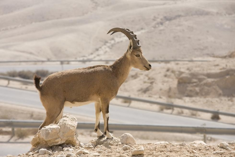 יעל נובי (צילום: shutterstock)