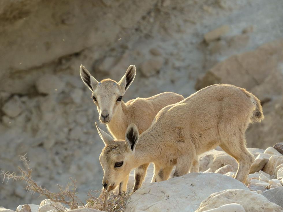 (צילום: מתן בוגומולסקי, רשות הטבע והגנים)