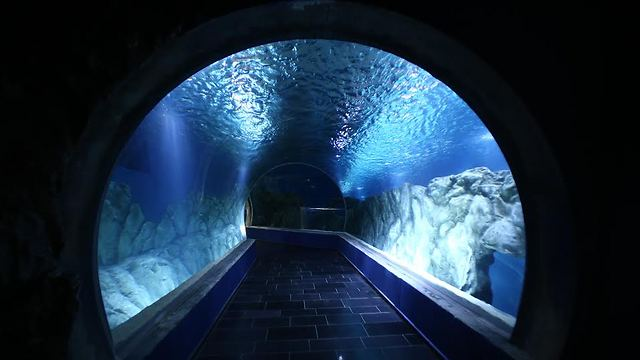 Jerusalem aquarium (Photo: Shlomi Cohen)