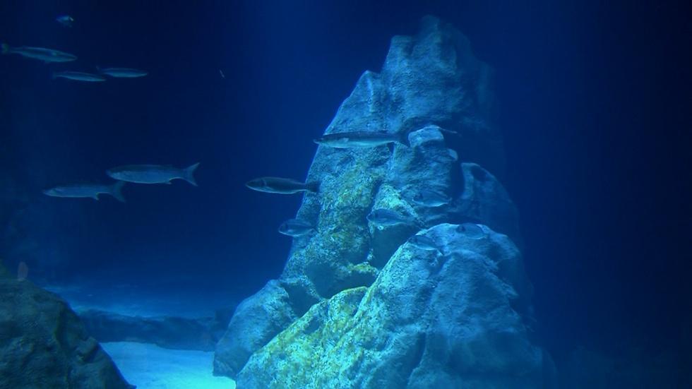 ים של דגים (צילום: אלי מנדלבאום) (צילום: אלי מנדלבאום)