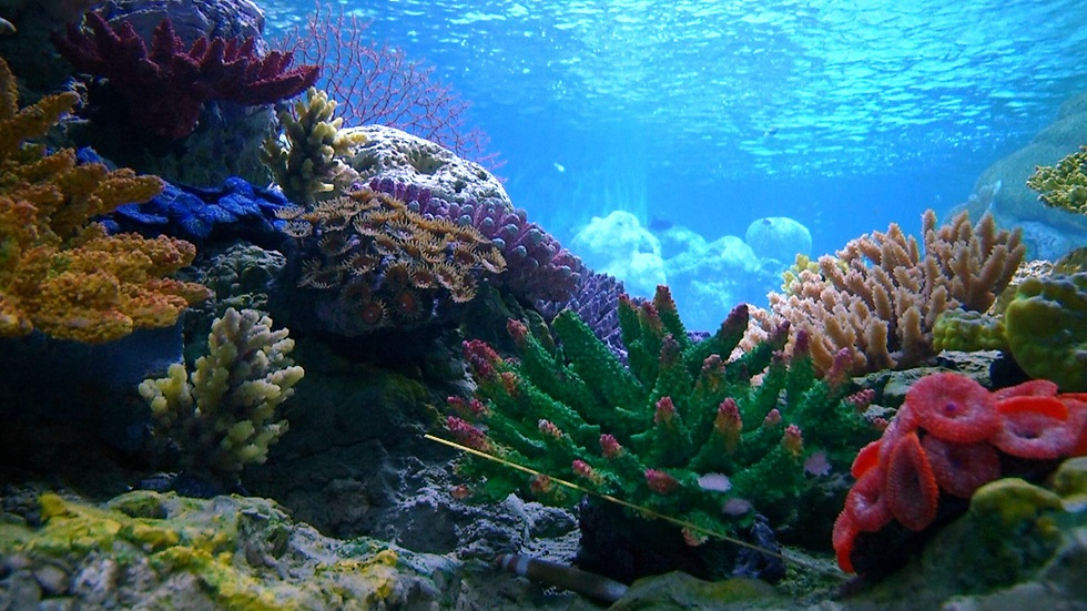 חיים ימיים בכל הצבעים (צילום: אלי מנדלבאום) (צילום: אלי מנדלבאום)