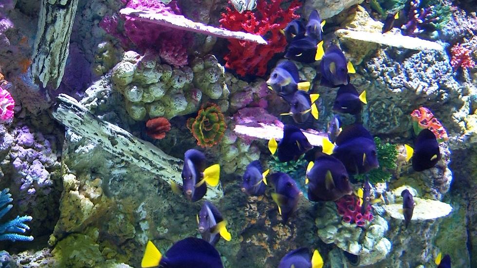 ברוכים הבאים לביתם של הדגים (צילום: אלי מנדלבאום) (צילום: אלי מנדלבאום)