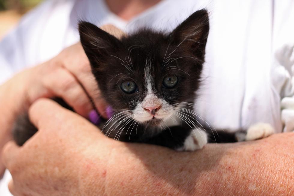 (צילום: חתולי רעננה)
