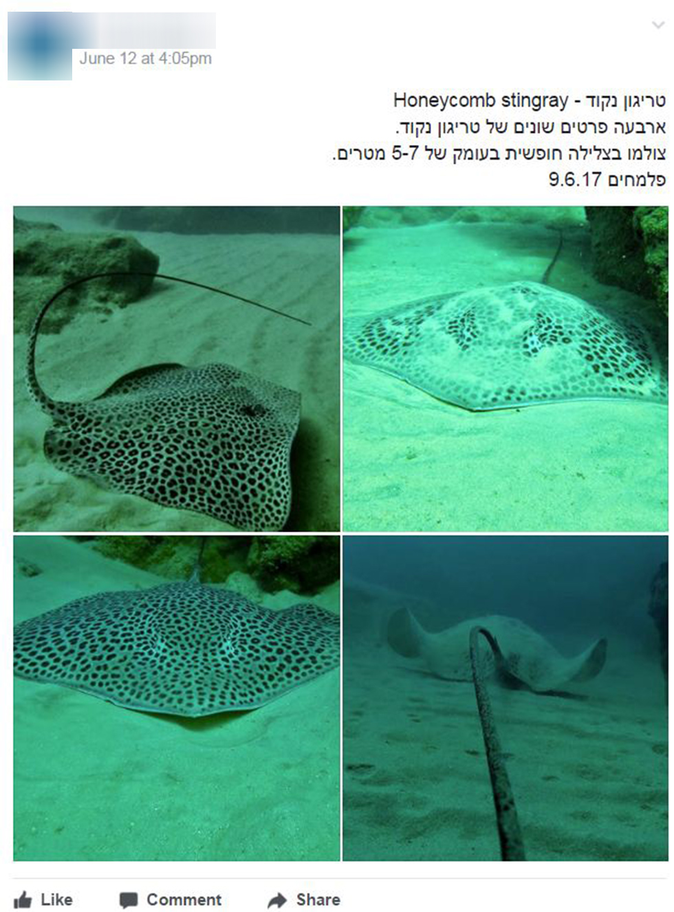 """(צילום מסך מתוך קבוצת הפייסבוק  """"כרישים בישראל"""") (צילום מסך מתוך קבוצת הפייסבוק"""