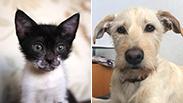 צילום: הכלבים שבצל, העמותה לחתולי רעננה