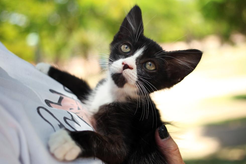 (צילום: ליאת מאיר, העמותה לחתולי רעננה)